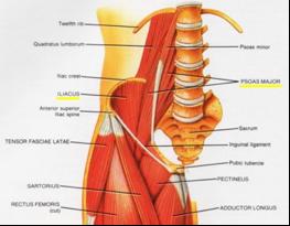 Iliopsoas Tendonitis and Iliopsoas Syndrome